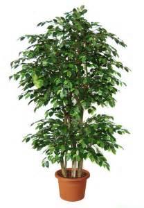 piante da ufficio purifica 11 piante da ufficio per migliorare l ambiente di lavoro