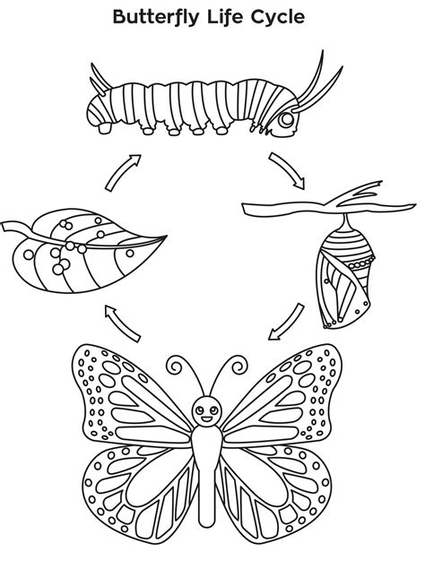 butterfly metamorphosis coloring pages 81 butterfly stages coloring page butterfly life