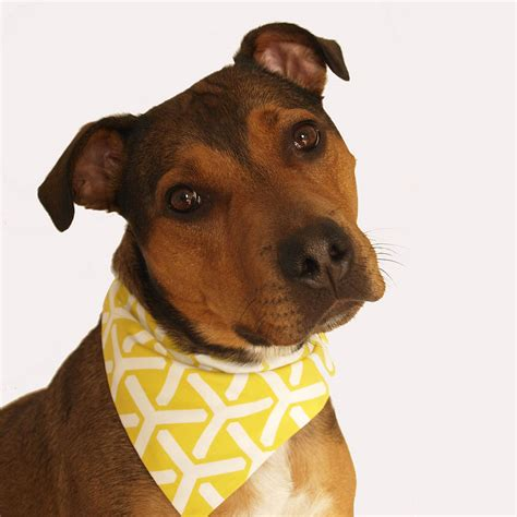 puppy bandanas twirl geometric bandana by east end best friend notonthehighstreet