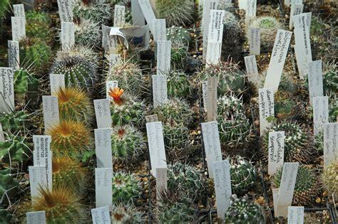 botanischer garten münchen lange nacht der museen botanischer garten und aromagarten friedrich