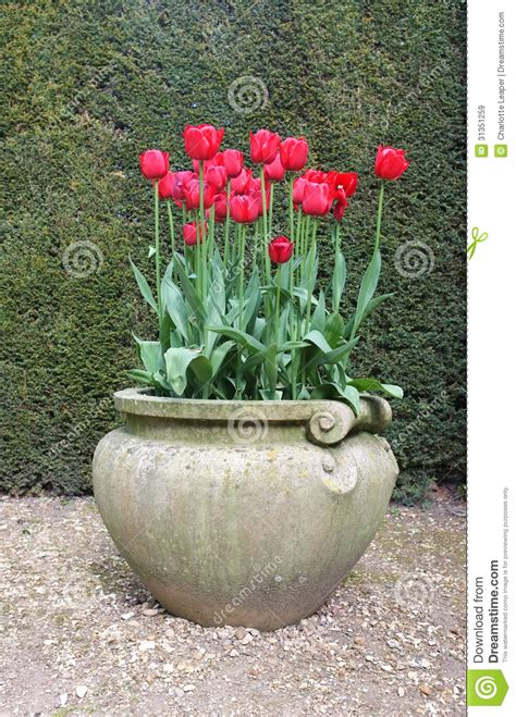 time pottery winter garden fl tulip flowers in antique vase royalty free stock