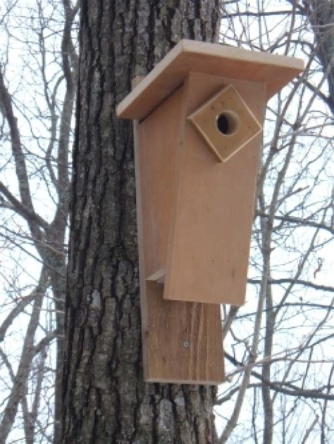 how to build bluebird houses bluebird nest box plans how to build a peterson bluebird house slant front style