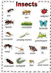 printable insect poster list of insect names insects pinterest english