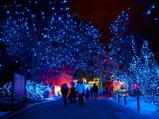 Denver Zoo Lights Ice Skating And More 7 Best Things To Metro Zoo Lights