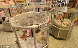 puppy boutique store all dogs may go to heaven but lawsuit seeks to prove they souls daily mail