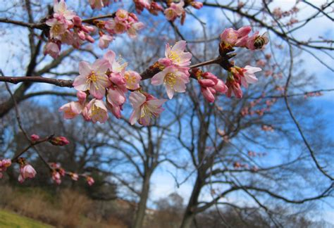 spring hill design jessica snare 6 wonderful places to see spring bloom in nyc wave hill