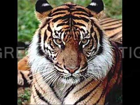 imagenes realistas de animales animales domesticos y sus respectivos salvajes wmv youtube