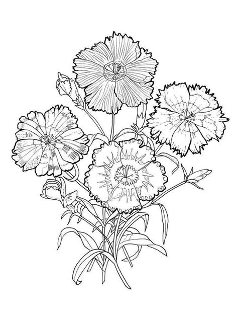 carnation flower coloring pages download and print