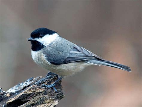 21 best my west columbia sc bird list images on pinterest