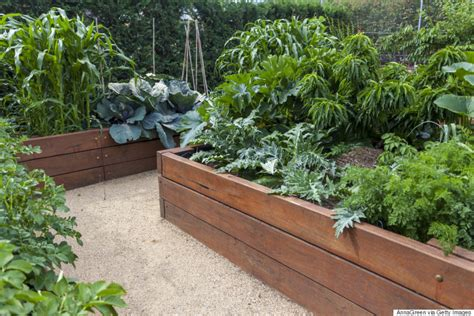 Vegetable Garden 101 How To Have A Plentiful Harvest Raised Bed Vegetable Garden Soil
