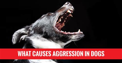 aggression in dogs obedience classes milwaukee what causes aggression in dogs sit means sit