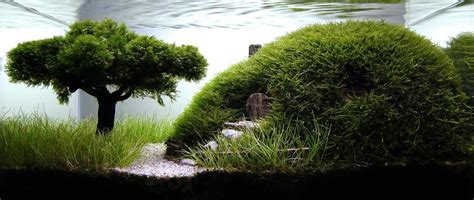 Aquascape Tree by Aquascaping Dustin Allen