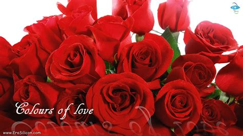images of love and flowers love flowers wallpapers wallpaper cave