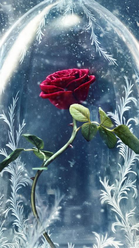rose in beauty and the beast wallpaper beauty and the beast rose red best movies