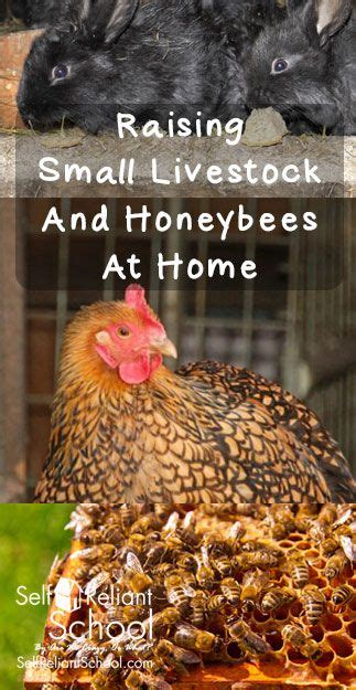 1000 Ideas About Urban Setting On Pinterest Senior How To Raise Bees In Your Backyard