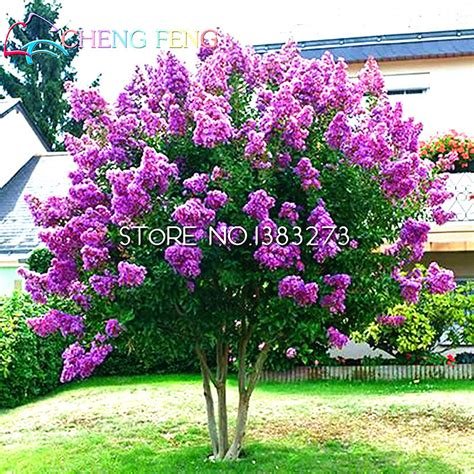 Popular Plants Flowers Trees Buy Cheap Plants Flowers Buy Garden Flowers