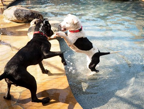 epic film dog watch pet resort throws epic pool party for 8 shelter