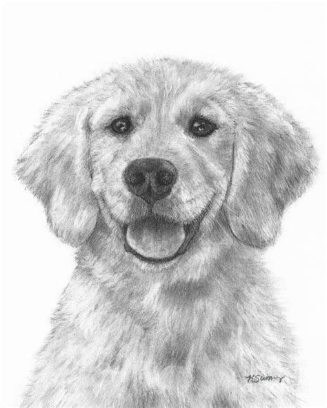 drawings of golden retrievers puppy golden retriever drawing by kate sumners