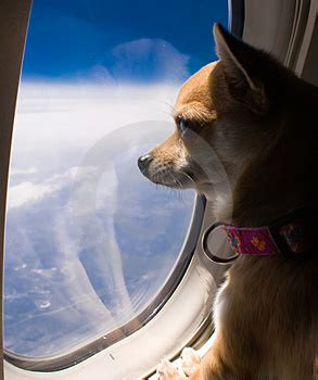 dogs on planes pet travel taking fido bts