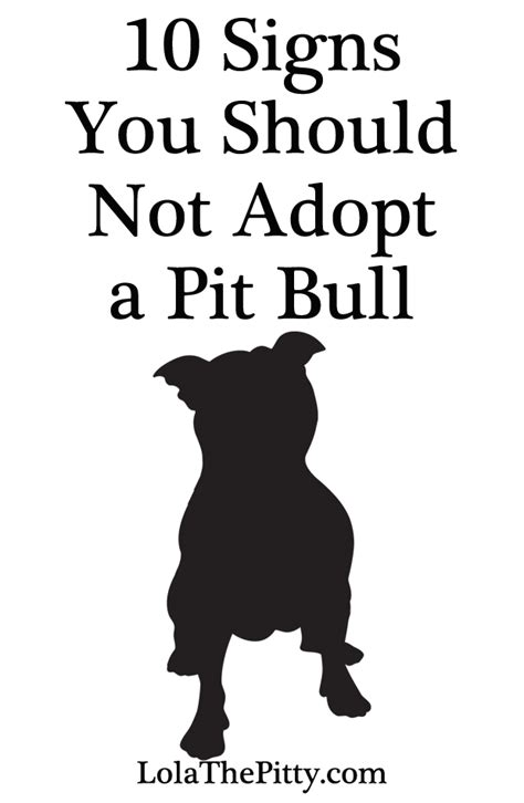 how do you start a in a pit 10 signs you shouldn t adopt a pit bull lola the pitty