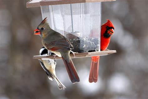 help birds survive in the winter wagners greenhouses