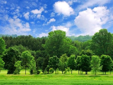 trees background summer season wallpapers one hd wallpaper pictures