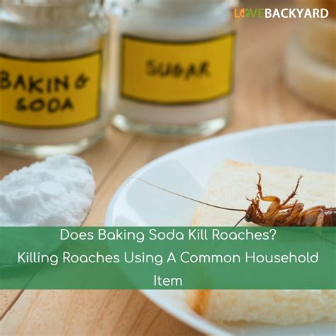 does baking soda kill bed bugs does baking soda kill bed bugs 28 images 17 best ideas