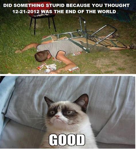 Stupid Cat Meme - did something stupid cat meme cat planet cat planet