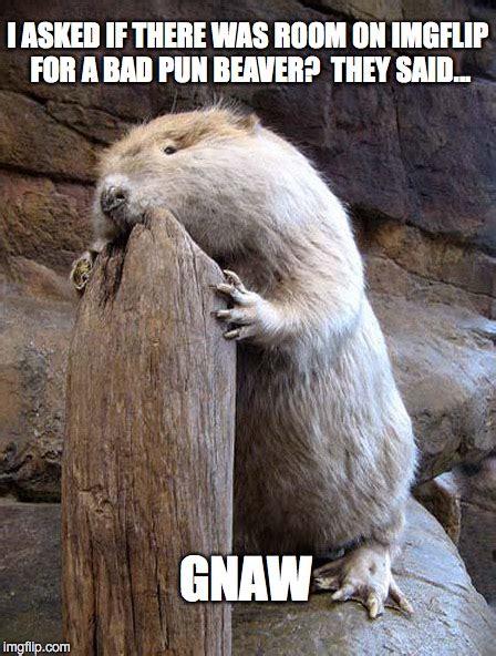 Beaver Meme - bad pun beaver imgflip