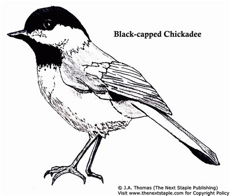 Bluebird Coloring Page Coloring Home Blue Bird Coloring Pages