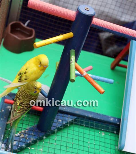 Murah Ayunan Burung Atau Mainan Atau Tangkringan tips menjinakkan dan melatih burung parkit klub burung