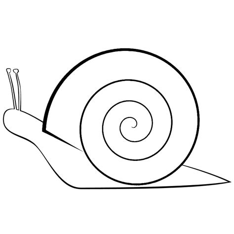 Free Coloring Pages Of Draw Snail Snail Colouring Pages