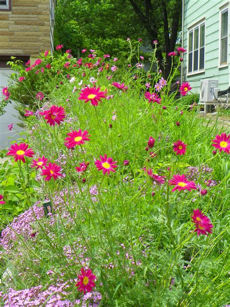 wildflower backyard wild flower garden ideas photograph wildflower garden