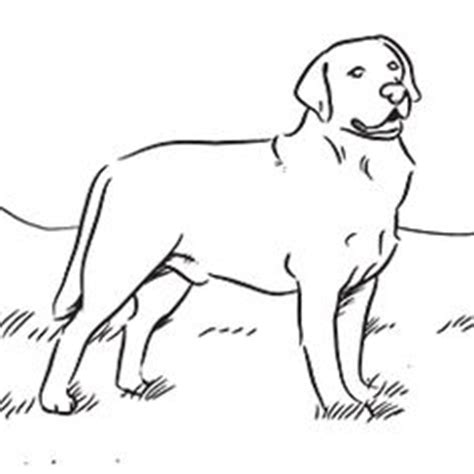 1000 images about honden on pinterest coloring pages