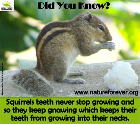 squirrels facts nature 3environment squirrelly