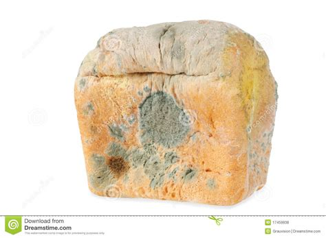 moldy bread isolated royalty free stock photos image