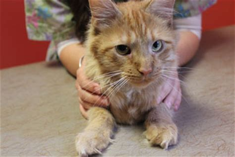 declawing puppies declawing cats get the facts about feline declawing