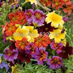 Velvet Garden Flowers Diy Home Garden Plant 100 Seeds Painted Tongue Mixed Colors Velvet Trumpet Salpiglossis Seeds