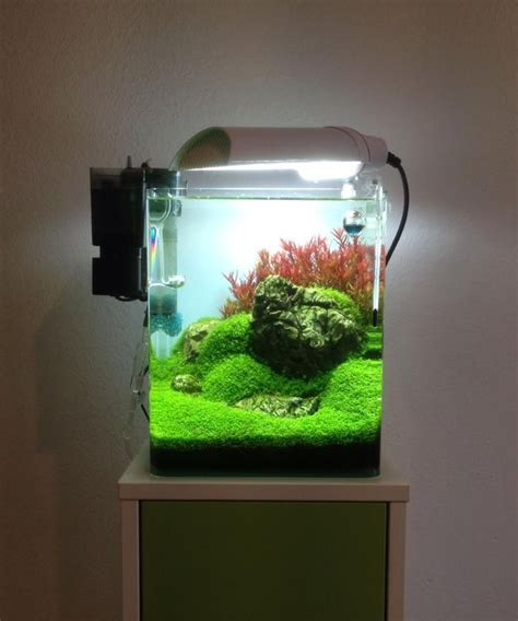 How To Set Up An Aquascape by 1000 Ideas About Nano Aquarium On Aquarium