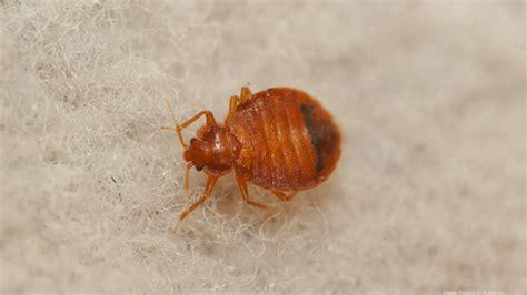 orkin bed bug treatment orkin bed bug treatment baltimore ranks no 1 in the u s