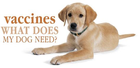 vaccines for dogs vaccines vaccines what does my need
