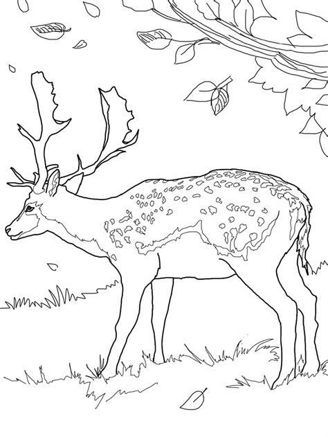 simple deer coloring pages 45 deer templates animal templates free premium