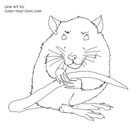 free coloring pages of mole rat