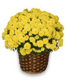 Sending Fresh Flowers - best 5 reasons to send flowers in november