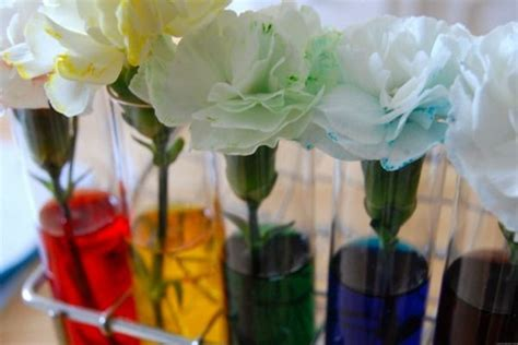 color changing carnations food coloring carnations tutorial crafts for