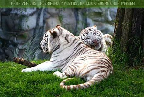 Imagenes De Paisajes Con Animales   imagenes de paisajes y animales paisajes con animales de