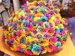 how to make rainbow roses a step by step guide lgbt news