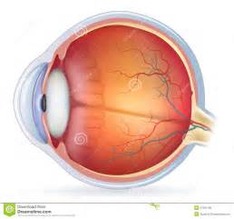 what part of the eye has color unlabeled eye diagram anatomy organ