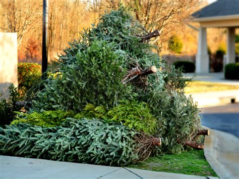 creative and safe ways to dispose of your christmas tree