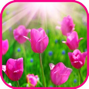 google images rose flowers roses tile puzzle android apps on google play